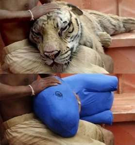 Making of Life of Pi  - Before and After Visual Effects CGI